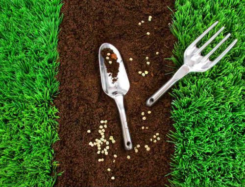 How to Grow Grass From Seeds
