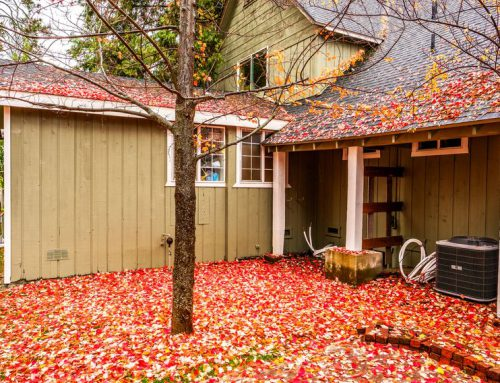 Fall Cleanup Tips