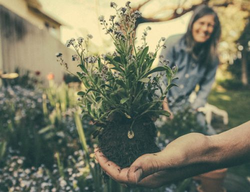 How to Keep Your Outdoor Plants Healthy & Strong